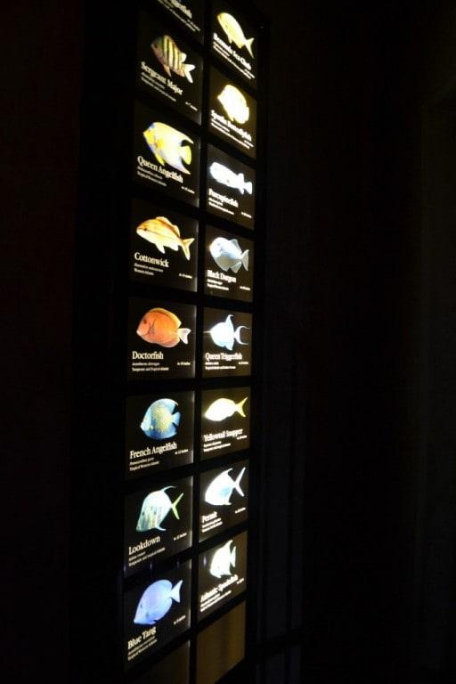 Aquarium 10