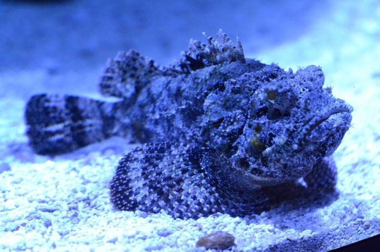 Fish at Ripley's Aquarium - Gatlinburg