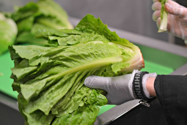 Romaine lettuce being cleaned