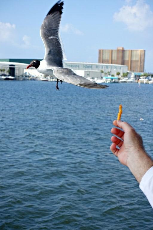 feeding a seagull a Cheeto