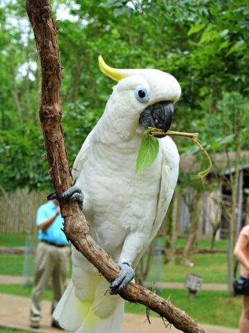Bird with twig in his mouth