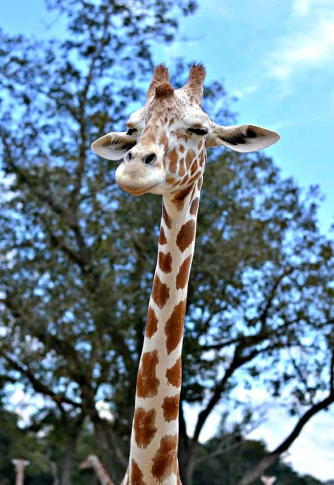 Global Wildlife Center in Folsom, Louisiana