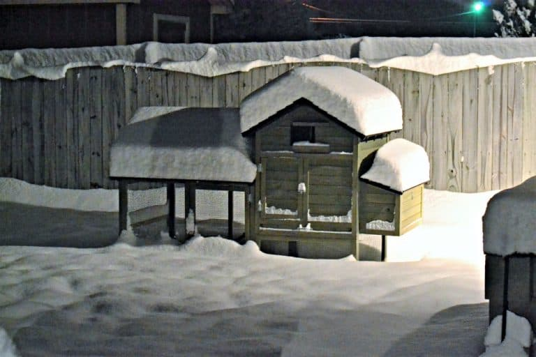 Snow capped chicken coop