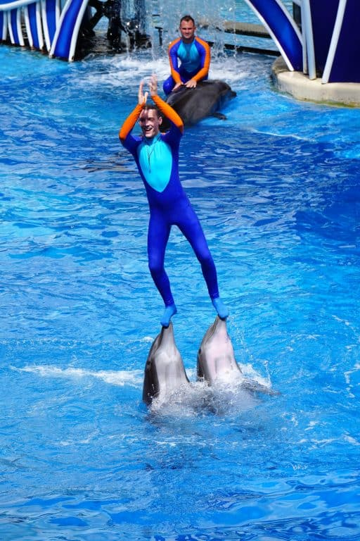 Man on dolphins at SeaWorld