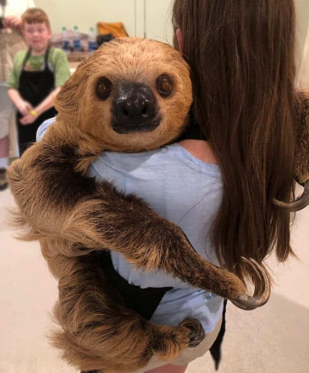 girl holding a sloth in Mississippi