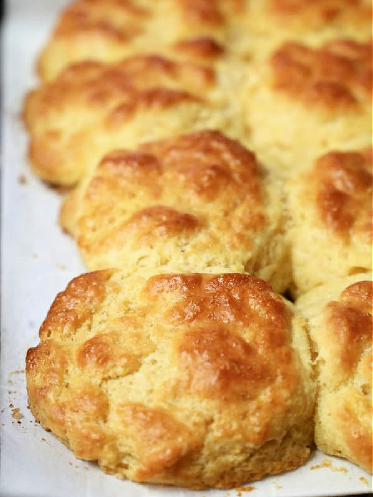 Row of biscuits on parchment paper.