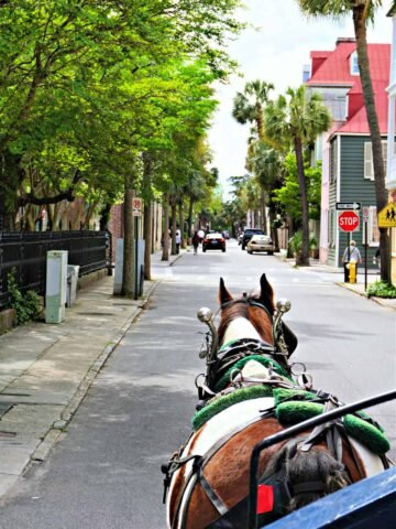 Horse carriage ride on the street of Charleston.
