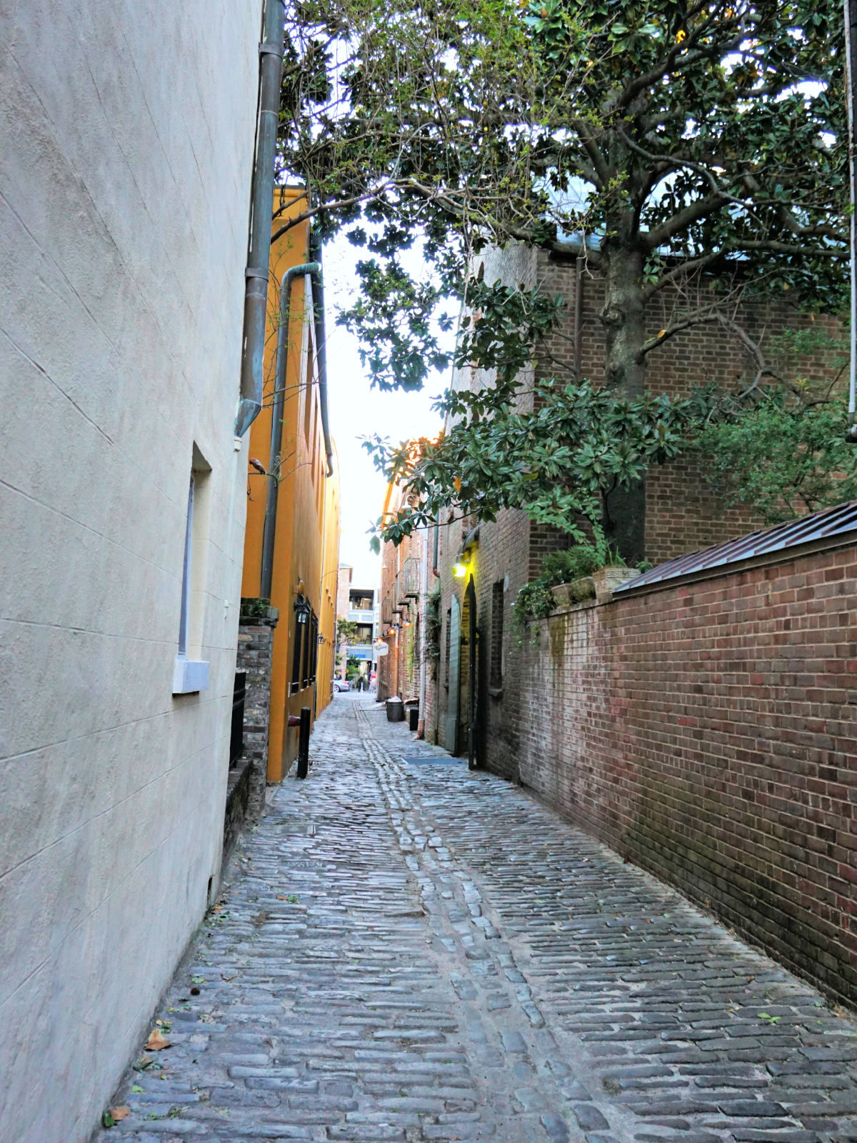 Narrow alley in Charleston.