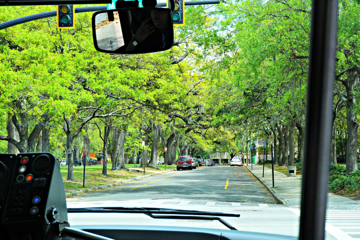 Tree lined street view from inside a bus.