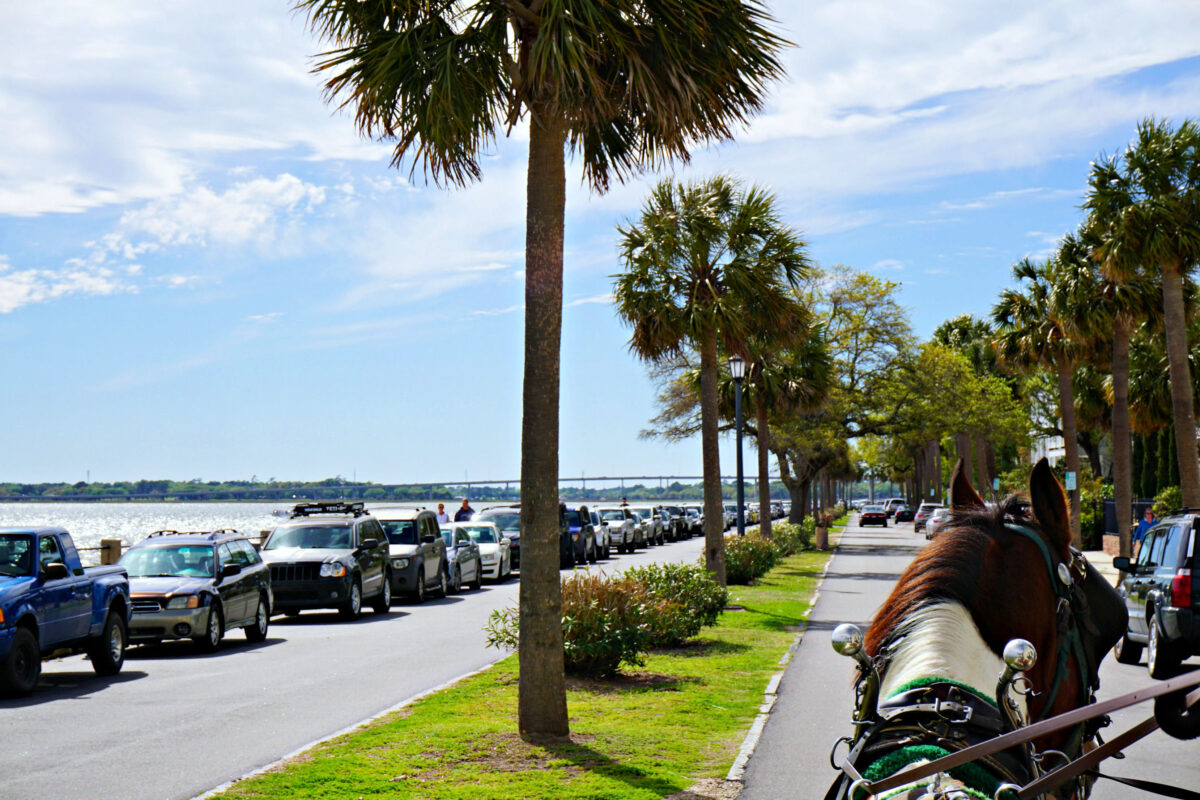 View from the front of a horse carriage along the water way in Charleston.